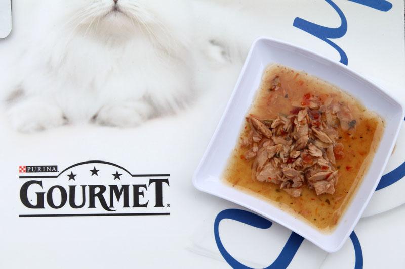 gourmet soup cibo gatti