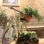 design art food le formiche roma i like bike