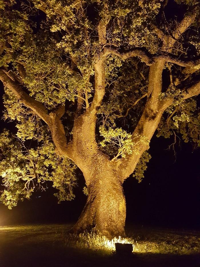 quercia-simbolo-skin-and-co-roma
