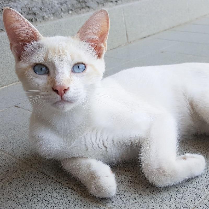 come-prendersi-cura-dei-gatti-in-estate-iams-2