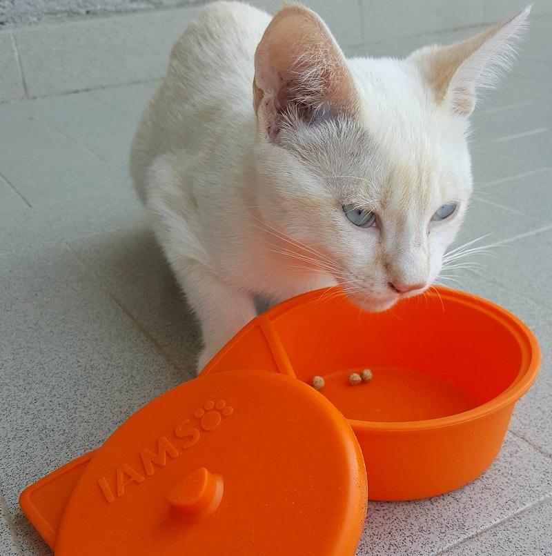 come-prendersi-cura-dei-gatti-in-estate-iams-3