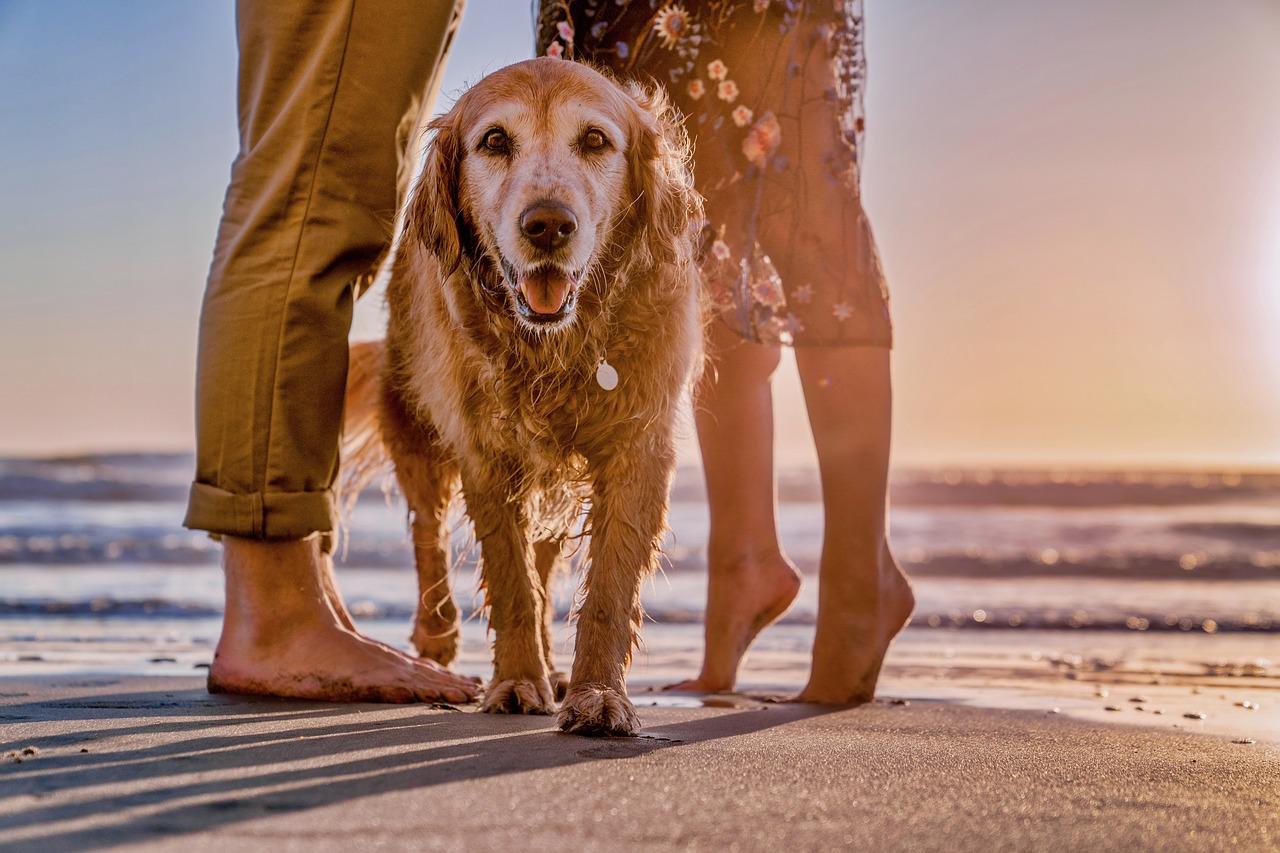 vacanze pet friendly come partire con gli animali