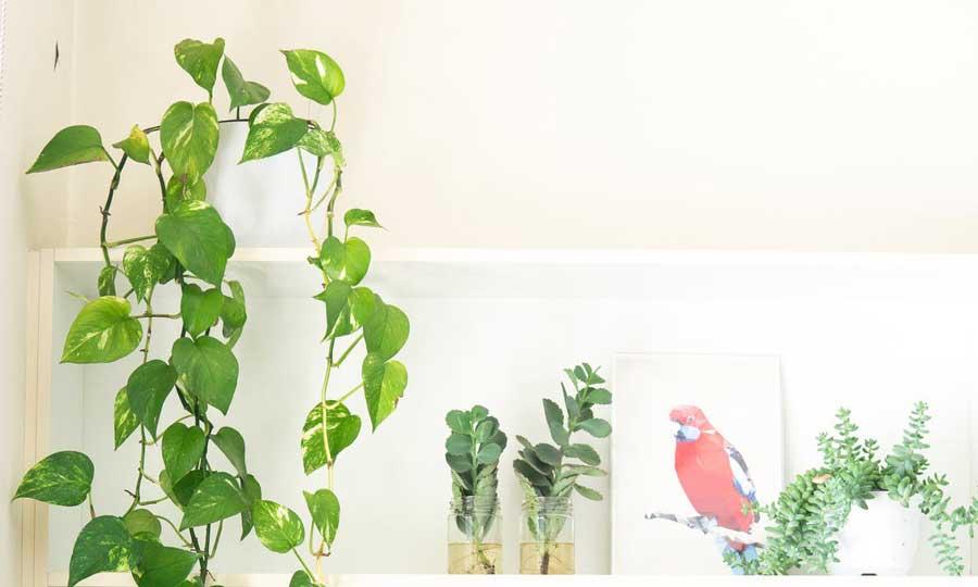 5 piante da interno facili da curare