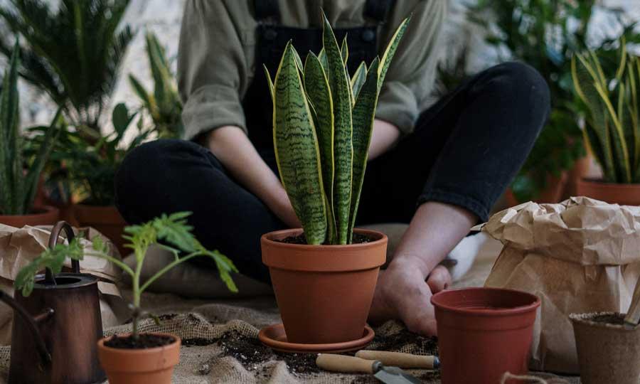 piante da interno facili da curare